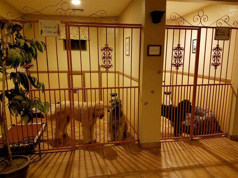 Phoenix Doggy Day Care Scottsdale Dog Boarding Pet