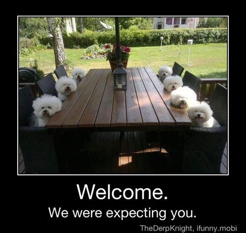iFunny :) (haha,lol,funny,cute,dogs,committee,awww ...