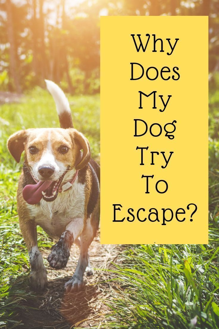 Escape behaviour in dogs waggy tales in 2020 dog
