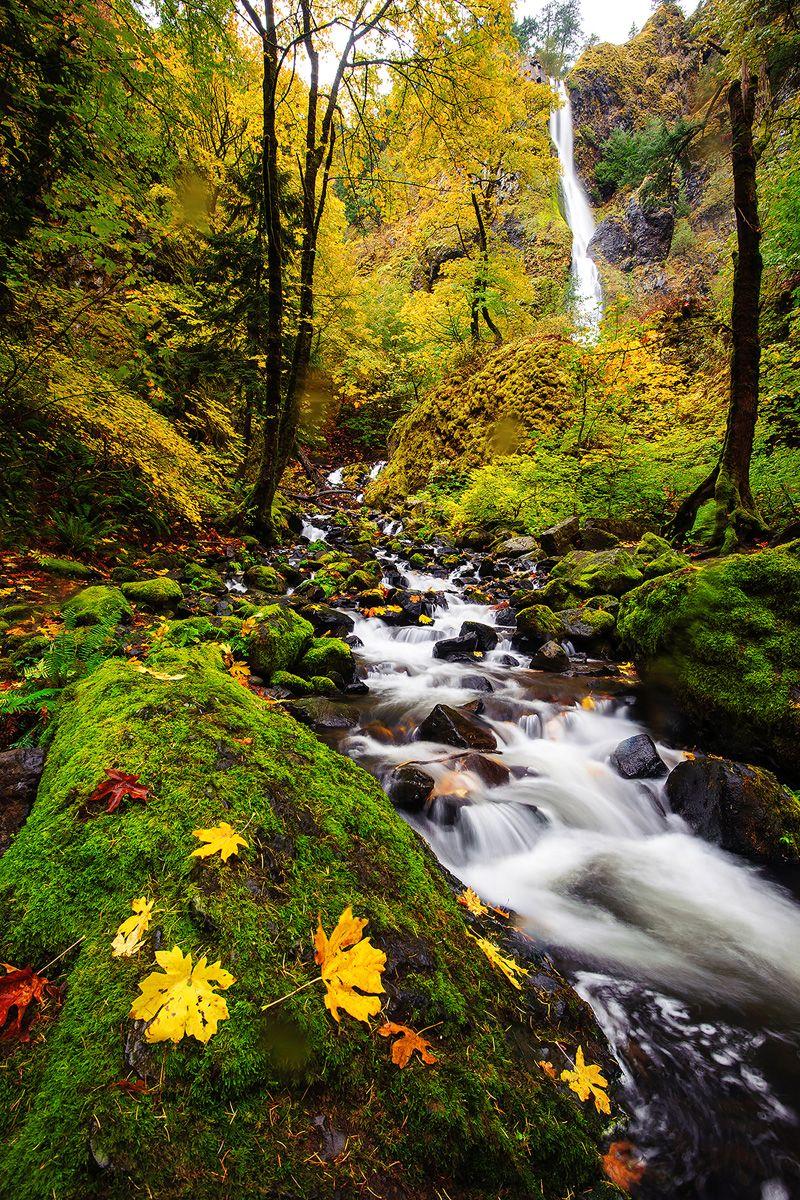 Pacific Northwest Rain Forest @ Piriya Photography
