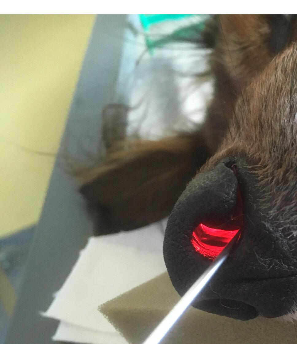 Medi Suit Schutzanzug Fur Hunde Schecker De Schecker Hundeanzug Hunde Schutzanzug Tiere