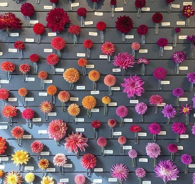 Flower Wall Escort Wall