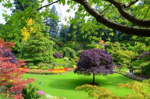 Butchart Gardens   Most beautiful gardens, Beautiful ...