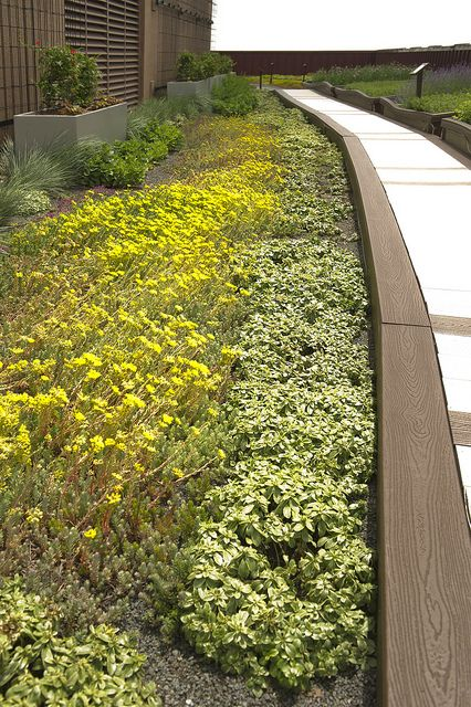 Strolling on Tremco's green roof