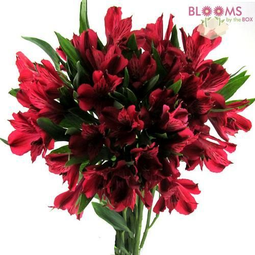 Wholesale Alstroemeria Red Peruvian Lily Lily Of The Incas Alstromeria Red Wedding Flowers Peruvian Lilies Red Flower Bouquet
