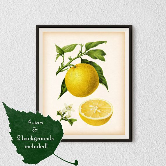 Botanical wall art, Citrus print, Orange print, Kitchen prints ...