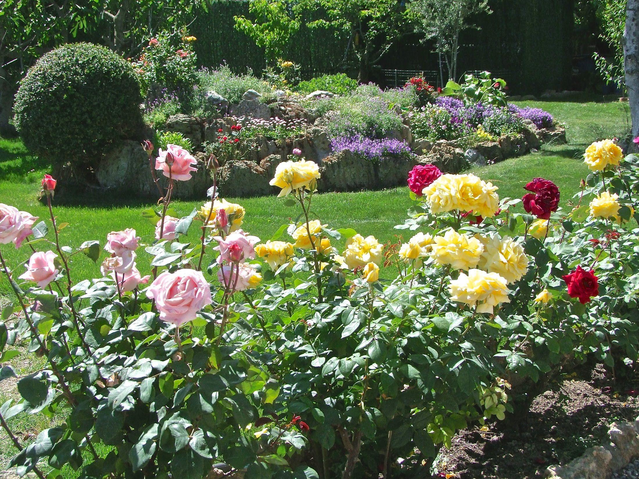 C mo cultivar bellas rosas mantenimiento y cuidados de for Jardin los rosales