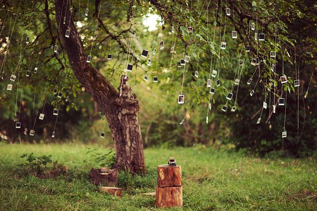 Polaroid Tree by kevin russ, via Flickr