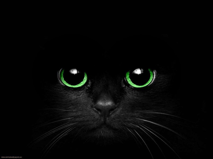 Black Cat Eyes Wallpaper: BLack Cat With Green Eyes By Cometsong