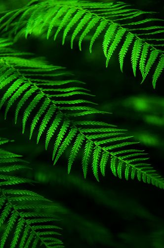 fern: Sincerity