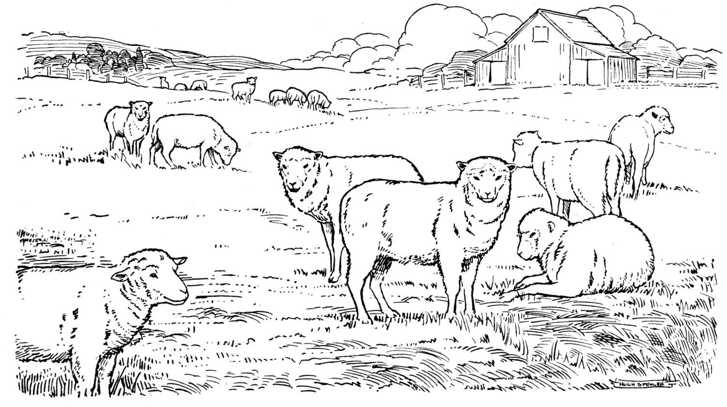 Sheep at pasture coloring page   Children's Art Ideas ...