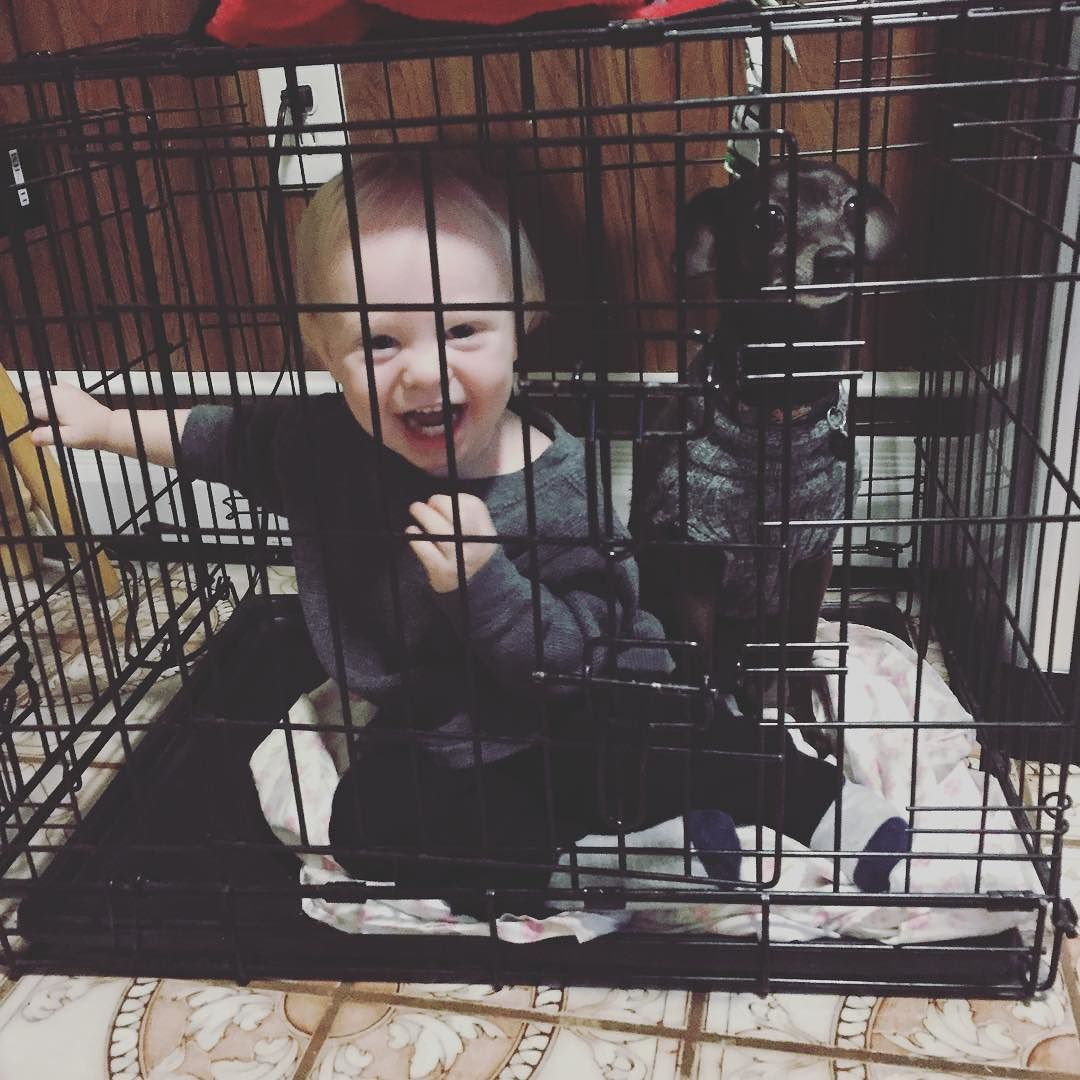 On instagram by samiam8521 #spaceinvader #unas (o) http://ift.tt/1Q48G1z has now invaded Lilly's safe haven. She is not happy about this #babyrex  #dogcage #youcanrunbutyoucanthide