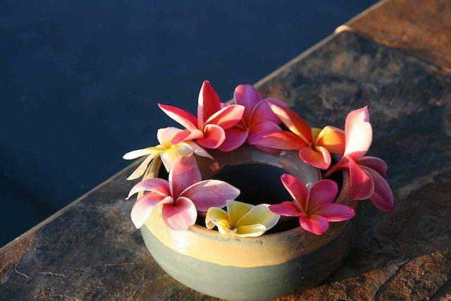 Plumeria Flower Ring Maui Plumeria Gardens Plumeria Plumeria Flowers Fragrant Flowers