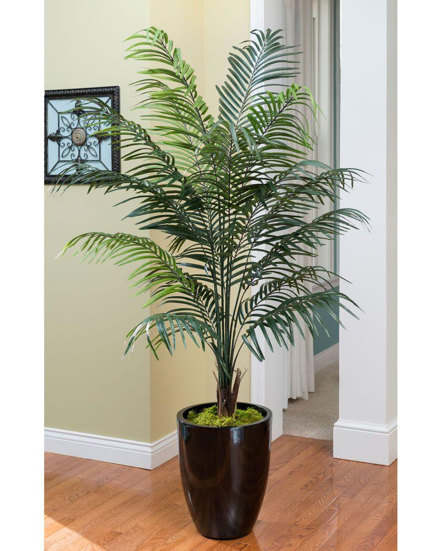 Nursery Indoor Plants Near Me: Palm House Plants, Plants Near