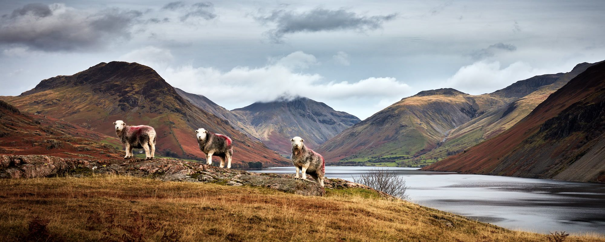 Three Sheep At Wast Water Lake District Poster Lake District England Lake District National Park Lake District