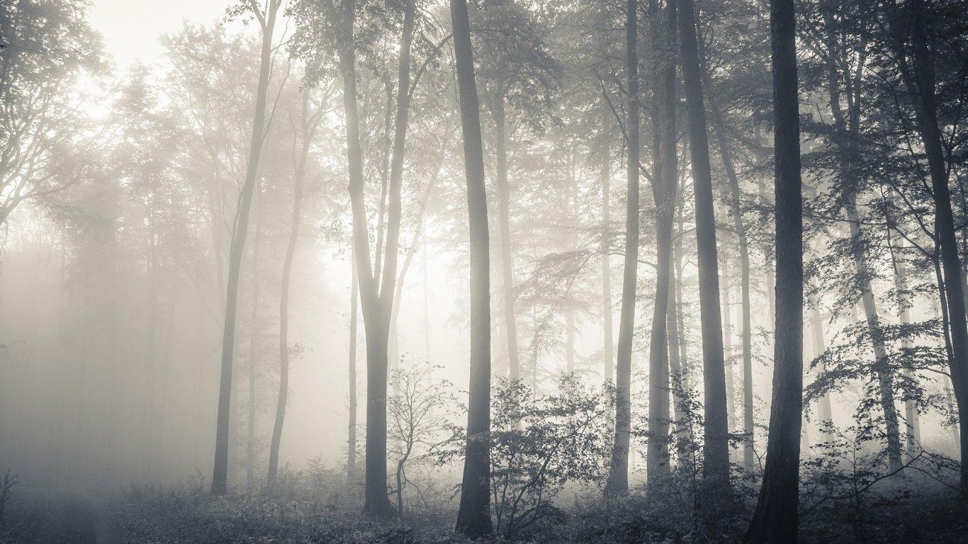 туманный лес рисунок биарриц