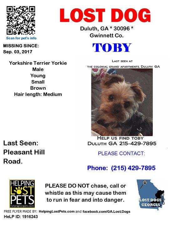 Pin By Lost Dogs Georgia On Dogs Lost In Georgia Dogs Losing A