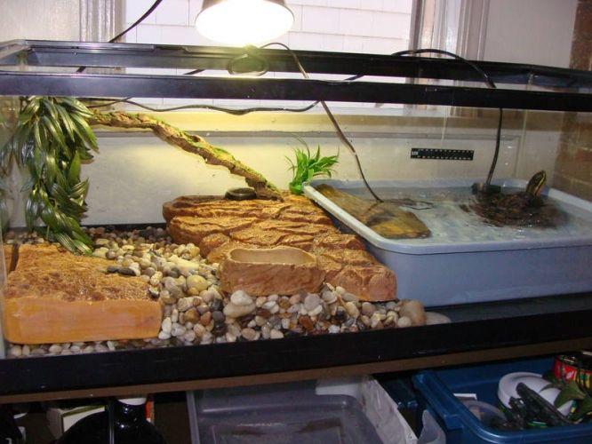 Malaysian Box Turtle Box Turtle Turtle Turtle Tank