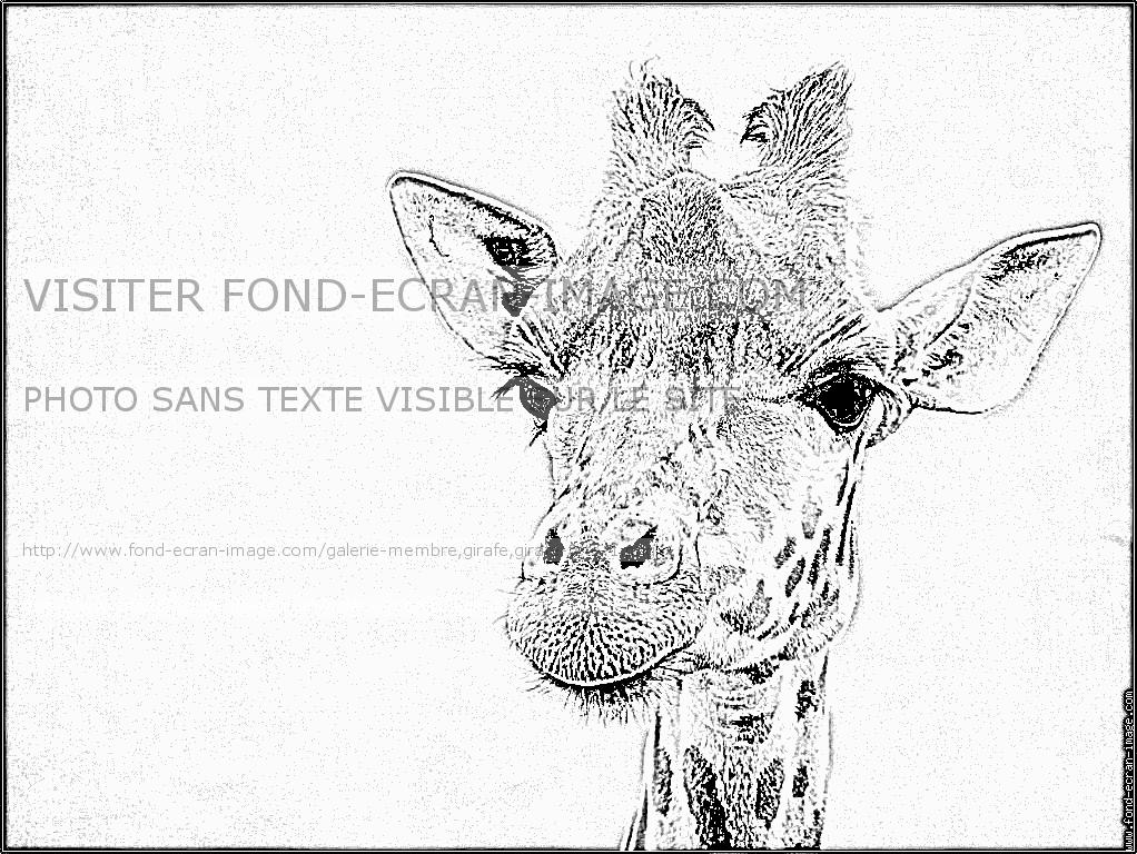 Coloriage Girafe Sans Tache.Coloriage Girafe Tete 1 Quand J Ai Le Temps Coloriage Girafe