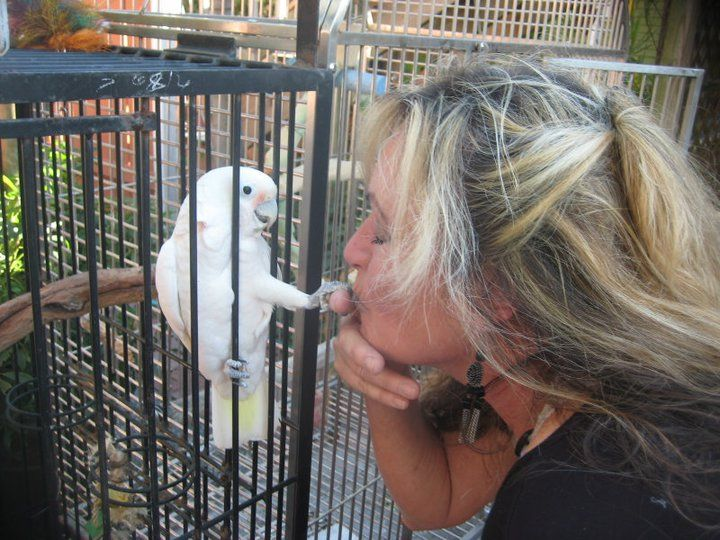 Bird Love Luann Apple And M A R S Resident Melbournebeach Florida Parrot Rescue Marsparrots Parrot Rescue Melbourne Beach Resident
