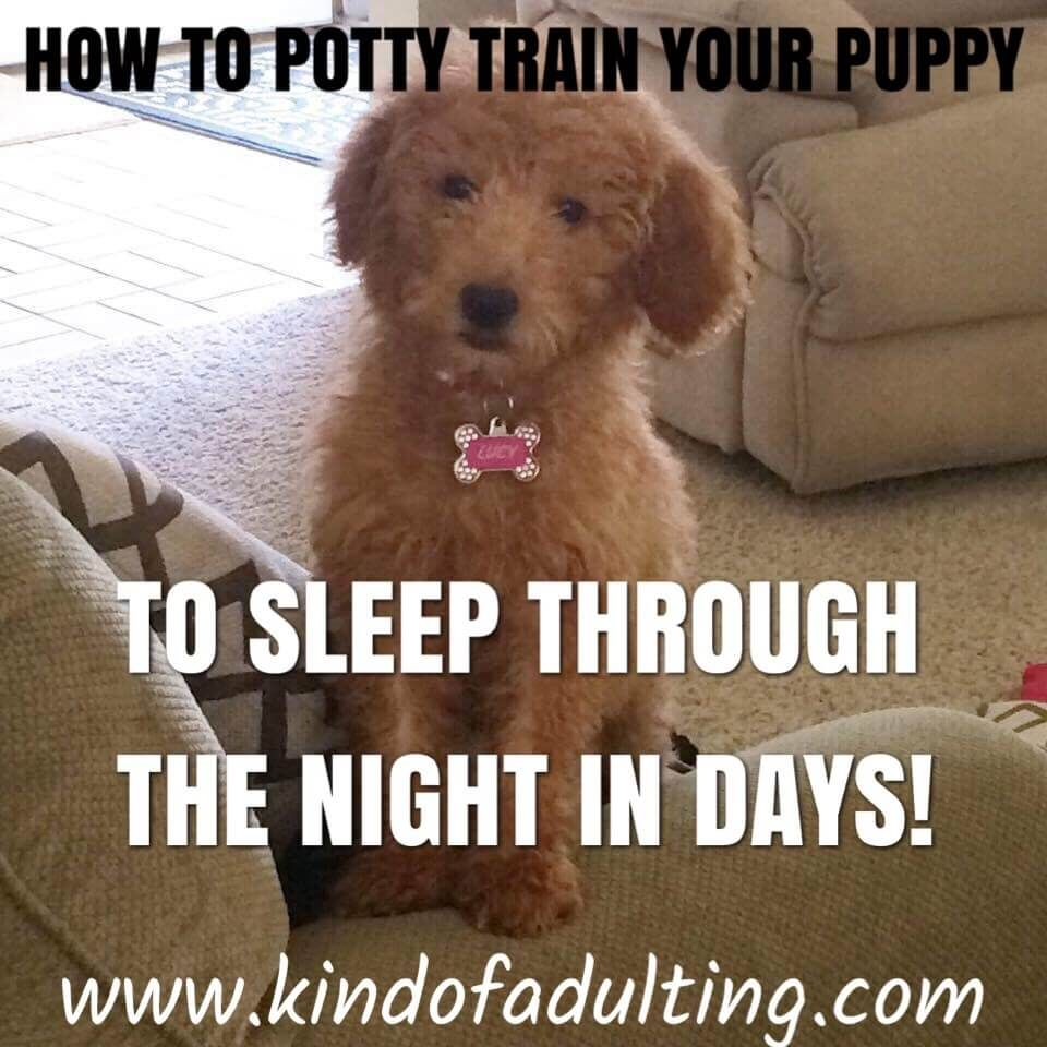 How To Crate Train Your Puppy To Sleep Through The Night In A Matter Of Days Crate Training Puppy Crate Training Dog Potty Training