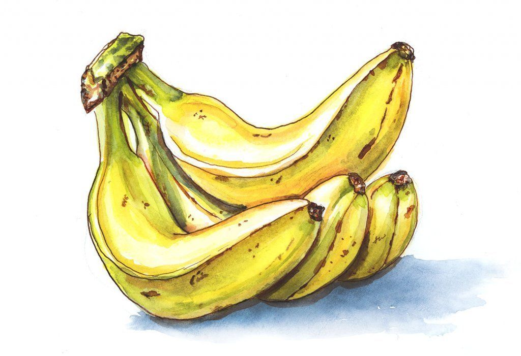 Going Bananas Fruit Sketch Fruits Drawing Fruit Painting