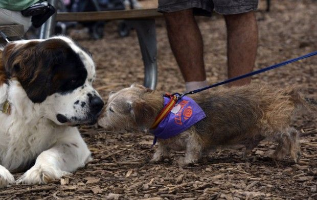 Family and furry friends got together at JCC