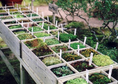 Moss buffet