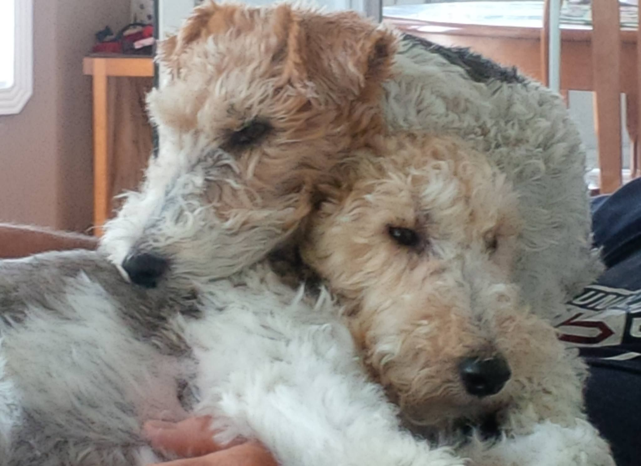 Looks like my Chester and Zoey the name is bond- lasting bond of ...