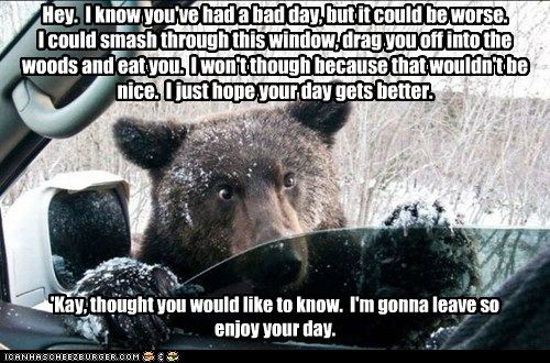 It Could Be Worse Funny Animal Memes Funny Animals Animal Memes