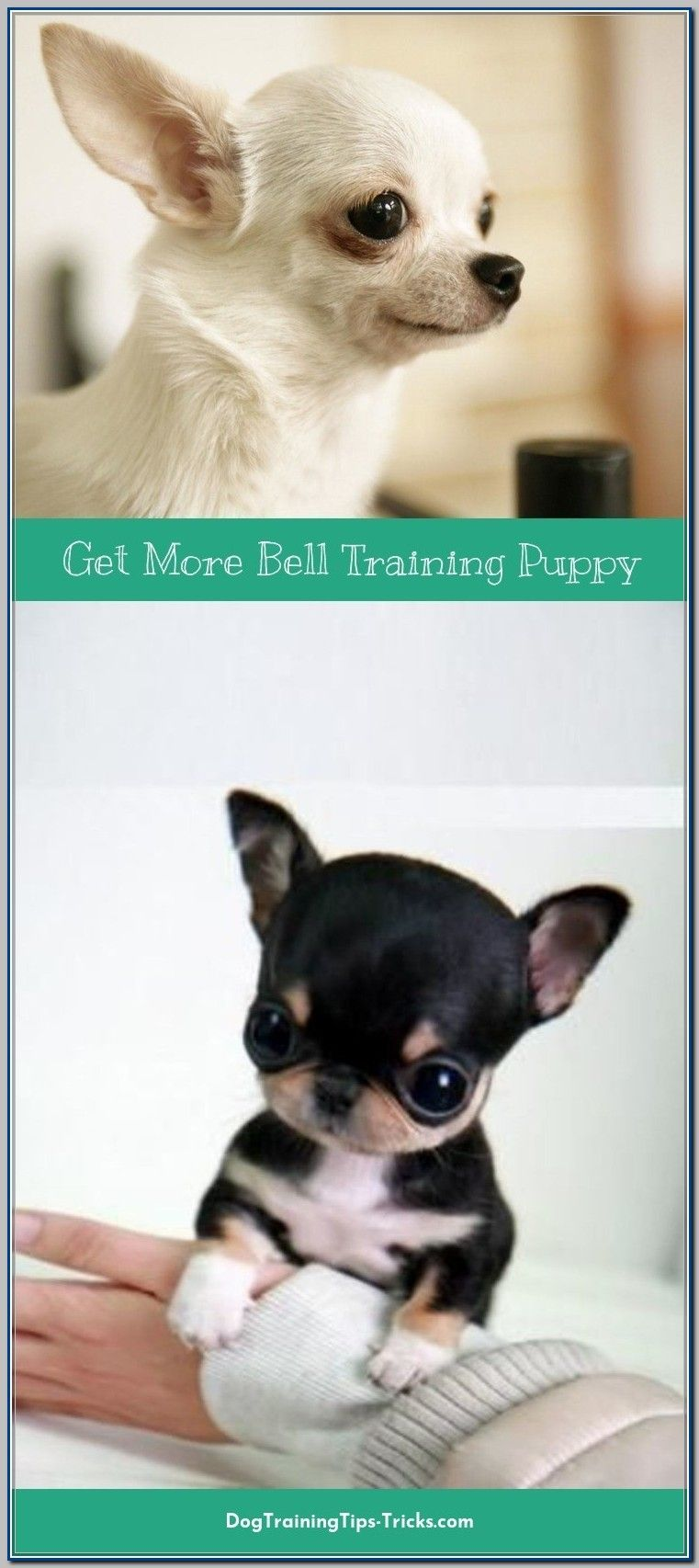 Ways To Use Bell Training For Puppies Dog Training Training