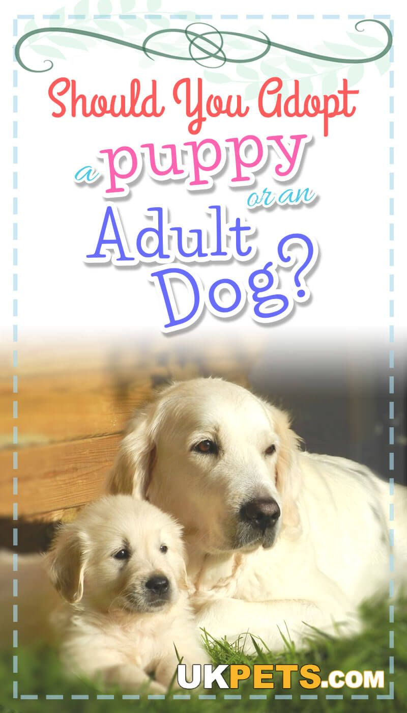 It Is Best To Weigh The Pros And Cons When You Adopt A Puppy Or A