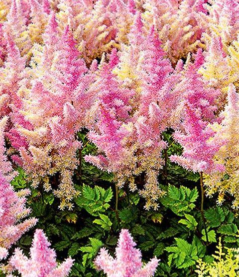 ehrfurchtiges typische herbstblumen und graser die den garten der kuhleren saison schmucken webseite images und dfefafbcabeaaaeee