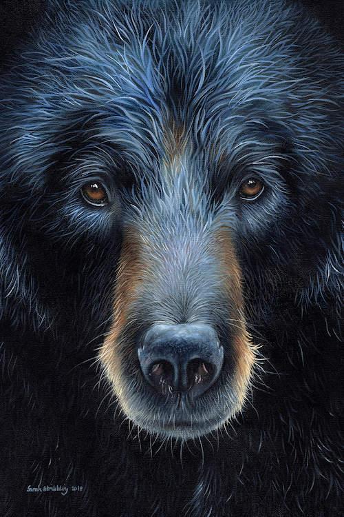 Black Bear I Canvas Artwork By Sarah Stribbling Icanvas Black Bears Art Bear Artwork Bear Paintings