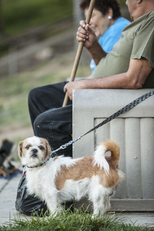 Time For A Walk At Levitt Pavilion Los Angeles In Macarthur Park Pets At The Pavilions Dogs Pets Pavilion