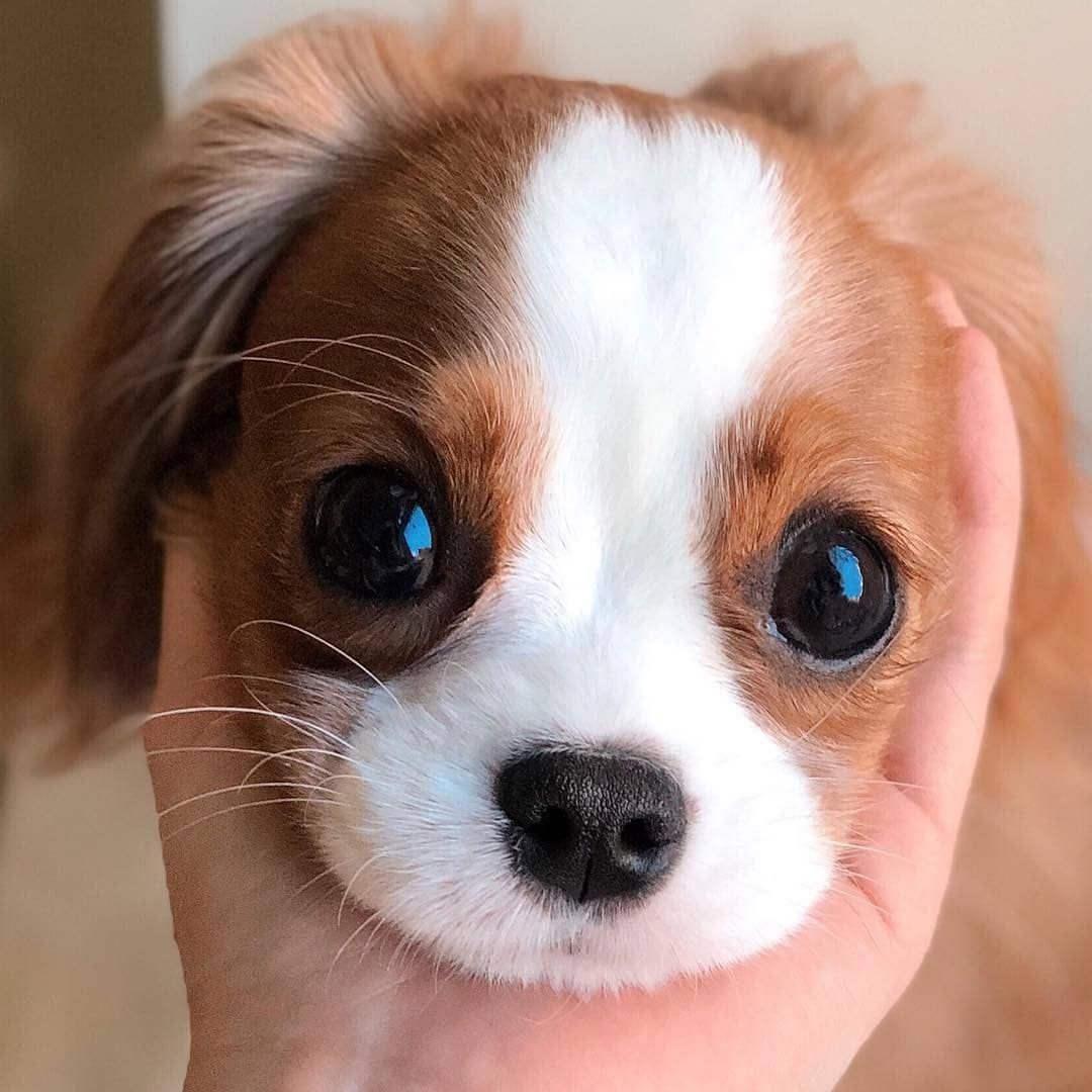 3 108 Likes 13 Comments Baby Puppies Babypet Vibes On Instagram Hooman S Hand My F En 2020 Dresser Un Chien Humour Animaux Shampooing Pour Chien