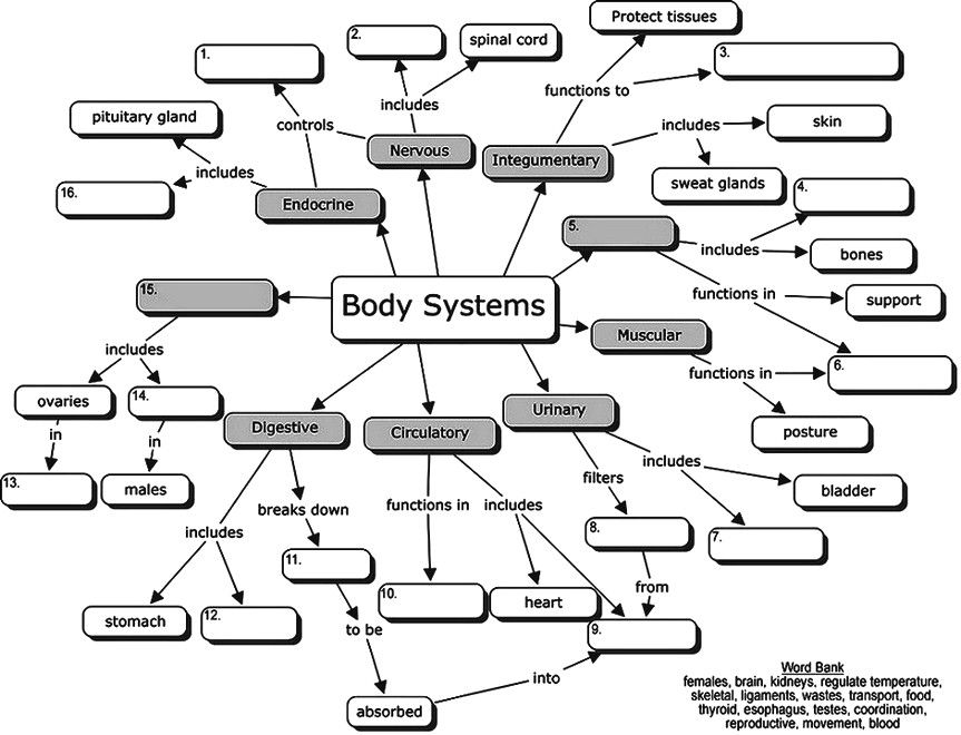Body Systems Concept Map Body Systems Concept Map (for students to fill in the blanks