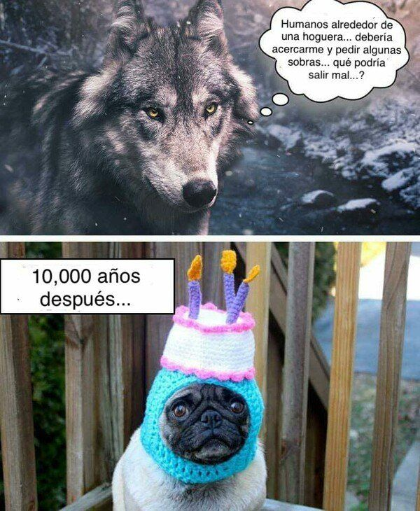 A Diferencia De Los Humanos Los Perros Mueven Mas La Colita Que Su Lengua Perros Frases Animales Frases Mascotas Memes