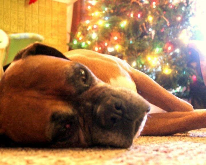 My boxer, Salty Dog