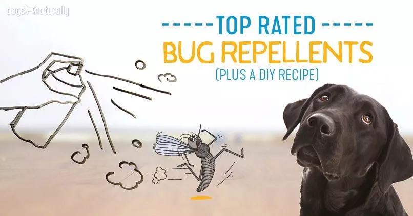 10 Natural Diy Mosquito Repellents For Your Dog In 2020 Mosquito Repellent For Dogs Dog Bug Spray Tick Repellent For Dogs,Property Brothers Houses So Expensive