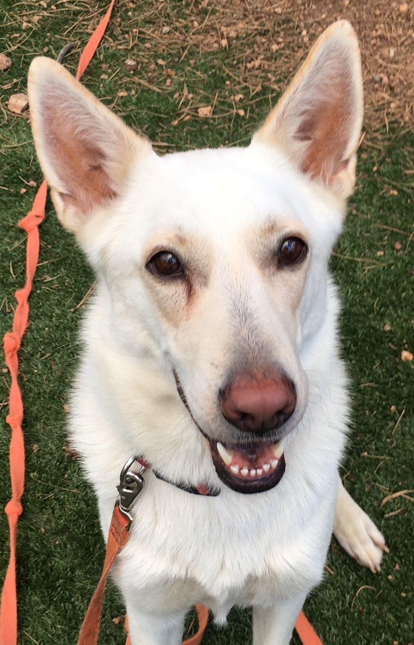 Adopt Cola and Pepsi on Petfinder Dog adoption, Pet