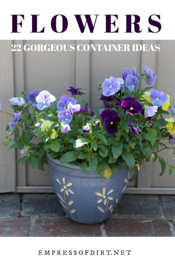 25 Flowers For Container Gardens