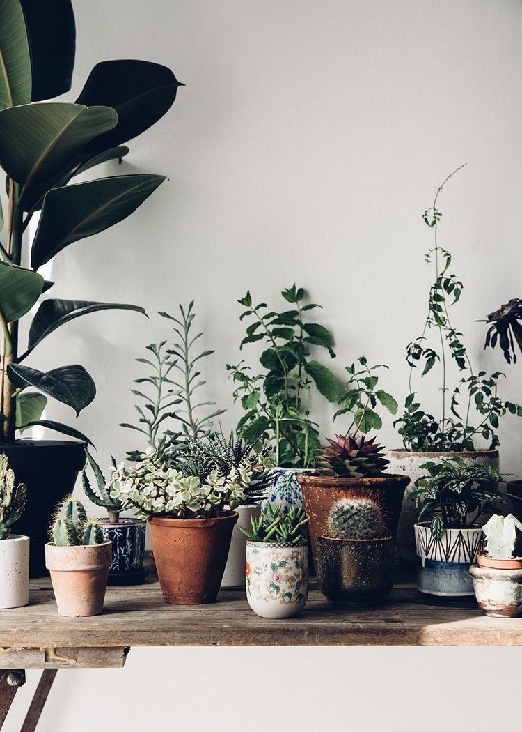 Dschungel badezimmer dekor the art of slow living  photo  plant babies  pinterest  planten