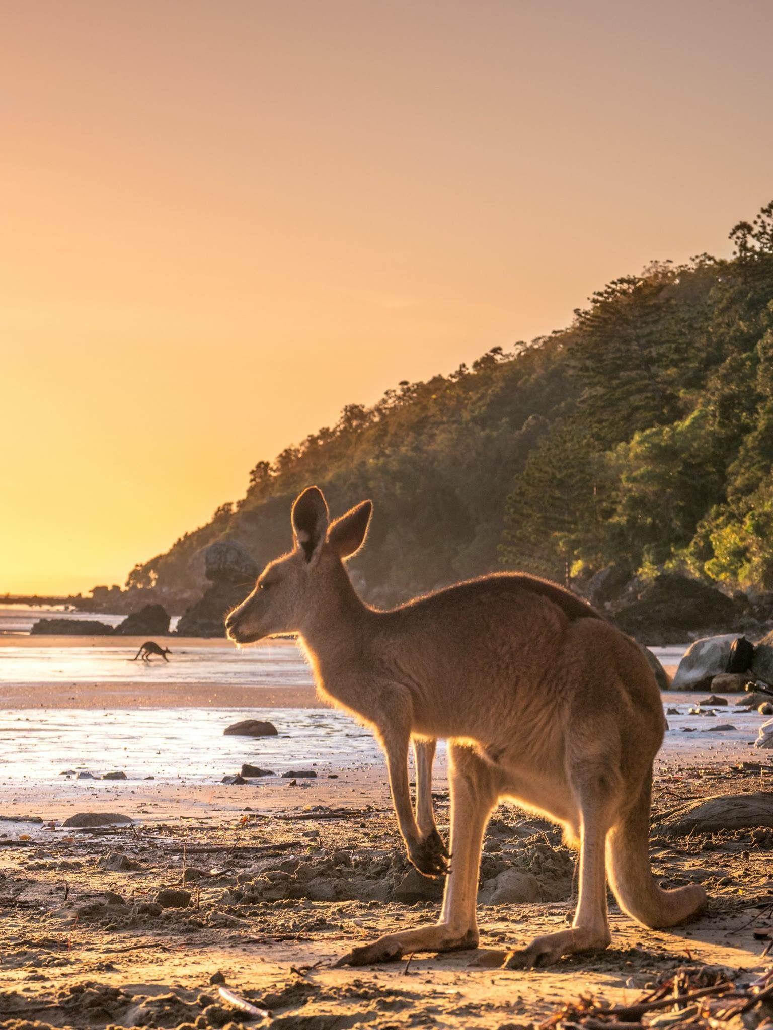 Cape Hillsborough, Queensland, Australia Indian ocean