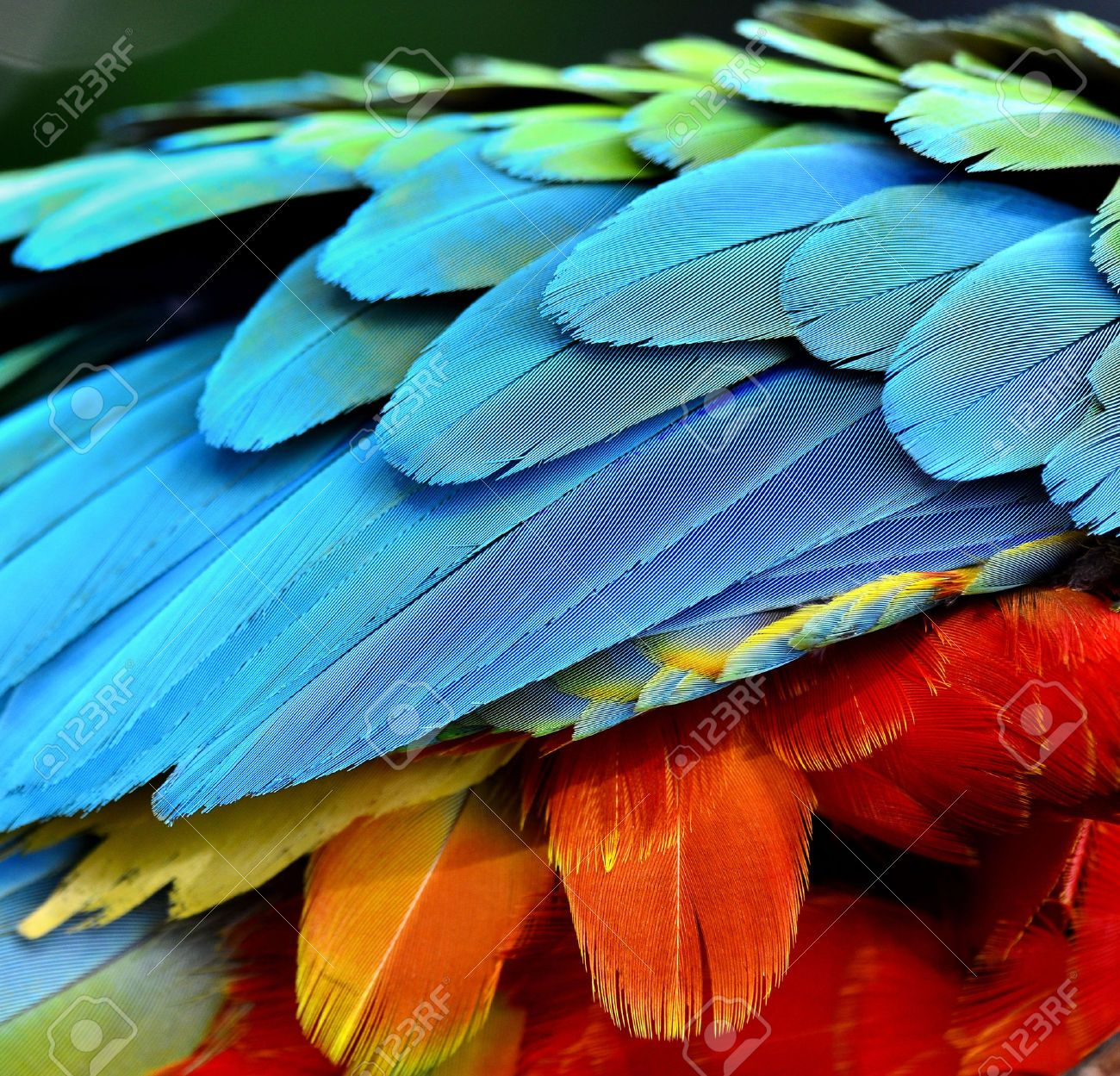 Close Up Of Parrot And Macaw Bird Feathers Bird Photography Parrot Feather Bird Feathers