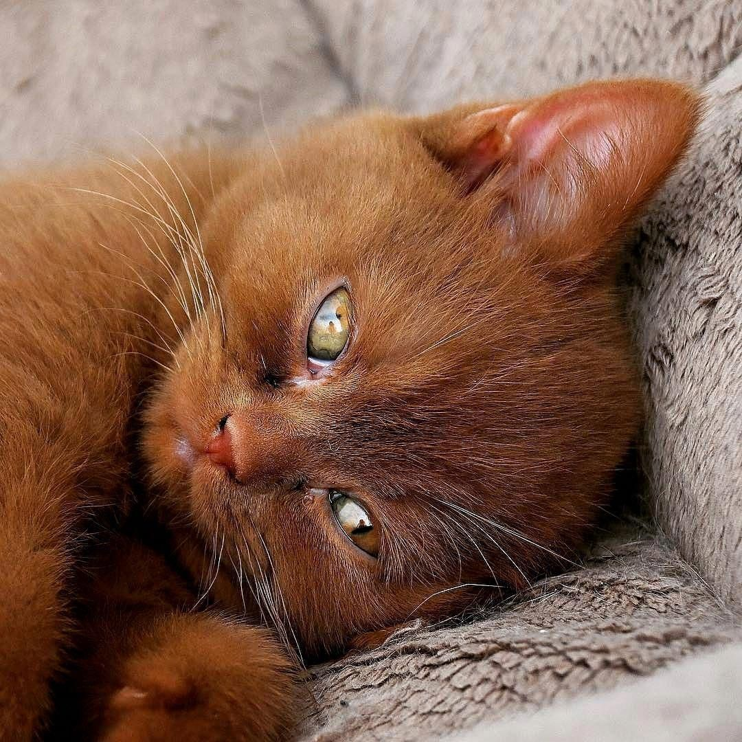 This kitten looks like a cross between a ginger tabby and