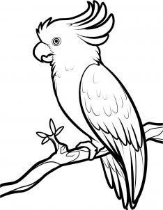 How To Draw A Cockatoo, Step by Step, Drawing Guide, by