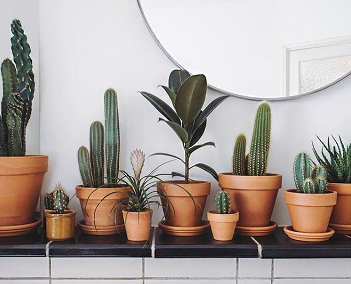 the 6 best plants to keep in your bedroom for better sleep