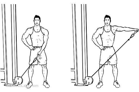 Single Arm Cable Lateral / Side Raise   Karın çalıştırma