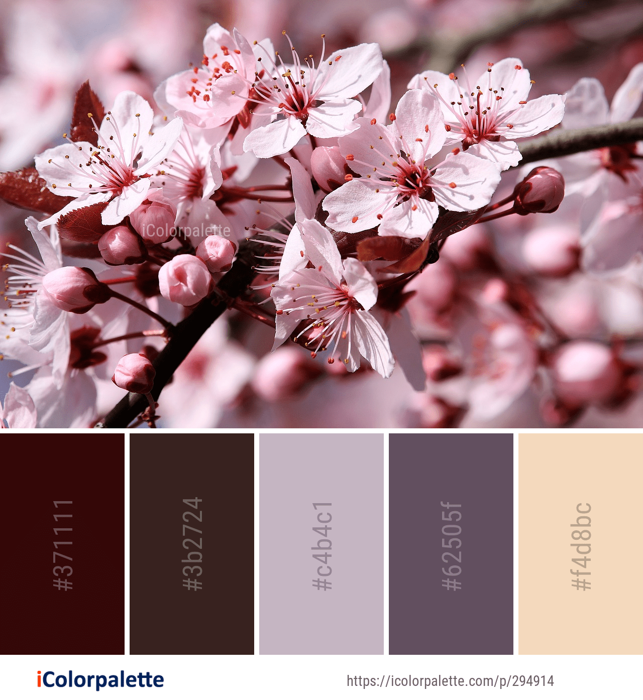 Color Palette Ideas From 1806 Blossom Images Icolorpalette Maroon Color Palette Color Palette Beige Color Palette